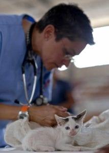kitten 569873 I Love Veterinary - Blog for Veterinarians, Vet Techs, Students