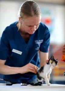 kitten 569956 I Love Veterinary - Blog for Veterinarians, Vet Techs, Students
