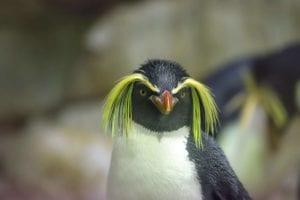 penguin 2104173 1920 I Love Veterinary - Blog for Veterinarians, Vet Techs, Students