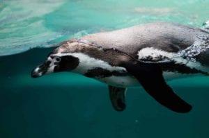 penguin 2203693 1920 I Love Veterinary - Blog for Veterinarians, Vet Techs, Students