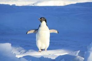 penguin 56101 1920 I Love Veterinary - Blog for Veterinarians, Vet Techs, Students