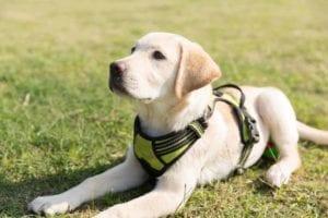 puppy 3014072 1920 I Love Veterinary - Blog for Veterinarians, Vet Techs, Students