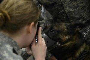 160309 F UV605 003 I Love Veterinary - Blog for Veterinarians, Vet Techs, Students