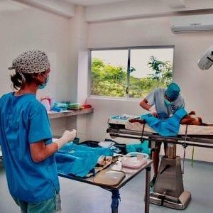 3 I Love Veterinary - Blog for Veterinarians, Vet Techs, Students