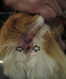 5829479954 22267a21d8 z I Love Veterinary - Blog for Veterinarians, Vet Techs, Students
