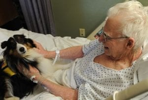 640px Langley therapy dog I Love Veterinary - Blog for Veterinarians, Vet Techs, Students