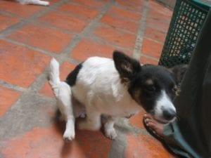 825207334 755bc3355b b I Love Veterinary - Blog for Veterinarians, Vet Techs, Students