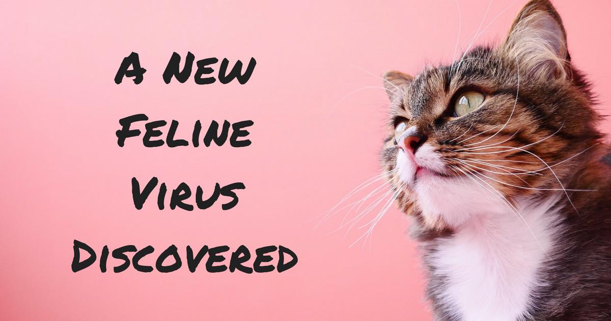 A New Feline Virus Discovered