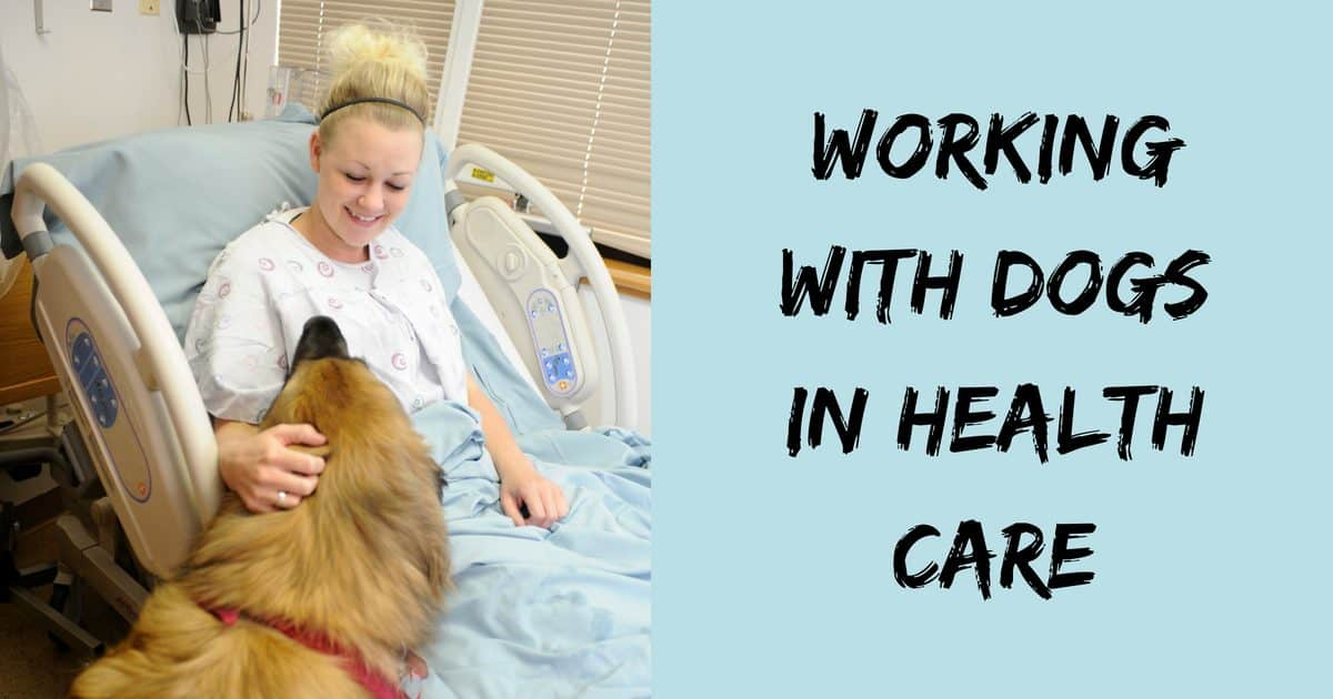 Working with dogs in health care