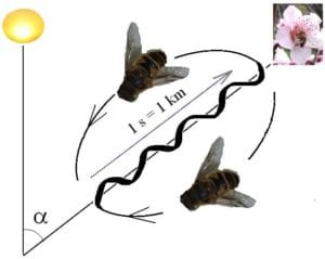 Bee dance I Love Veterinary - Blog for Veterinarians, Vet Techs, Students