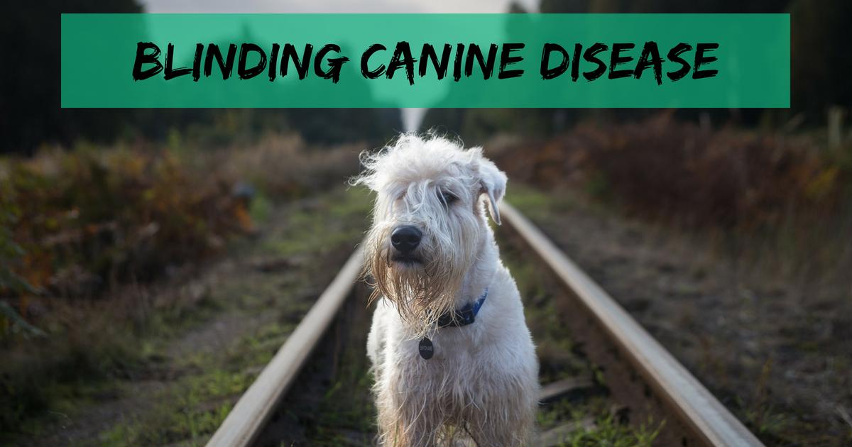 Blinding canine disease