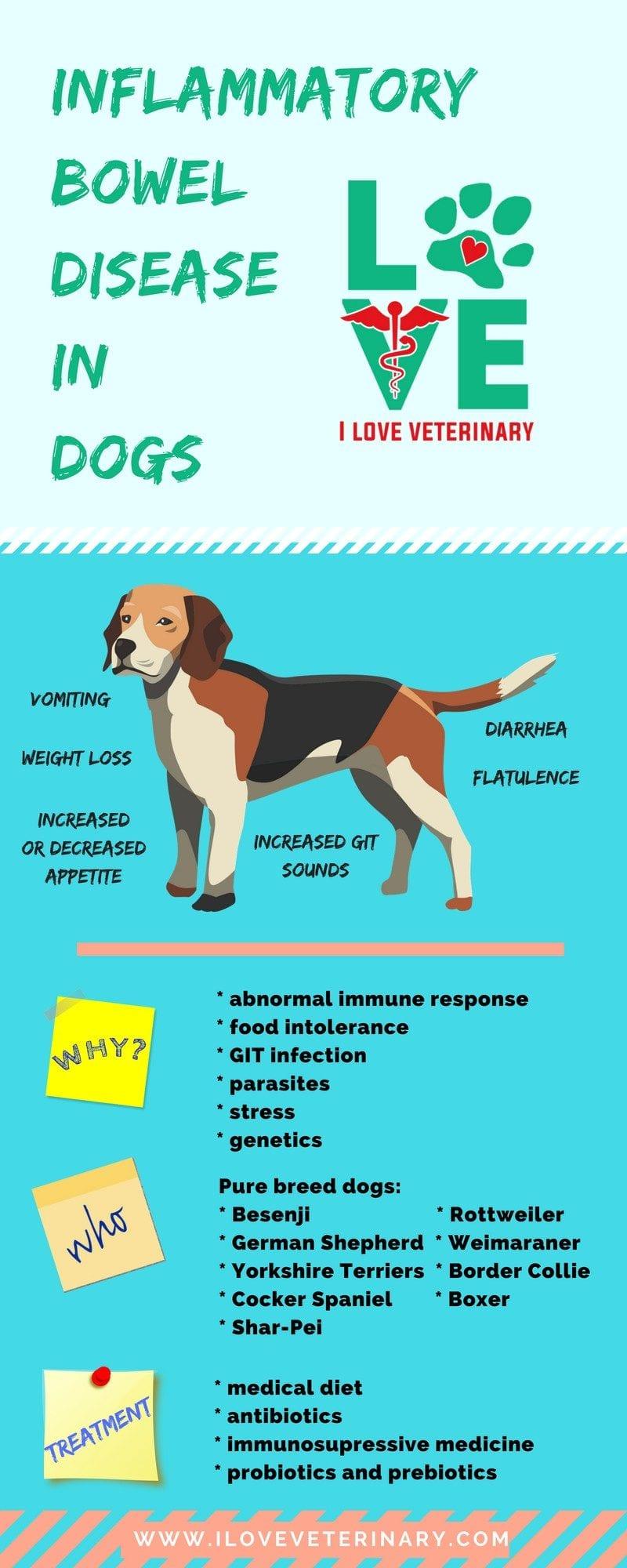 Business 1 I Love Veterinary - Blog for Veterinarians, Vet Techs, Students