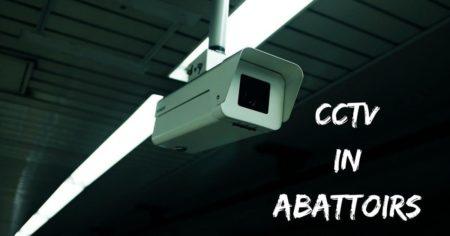 CCTV in abattoirs