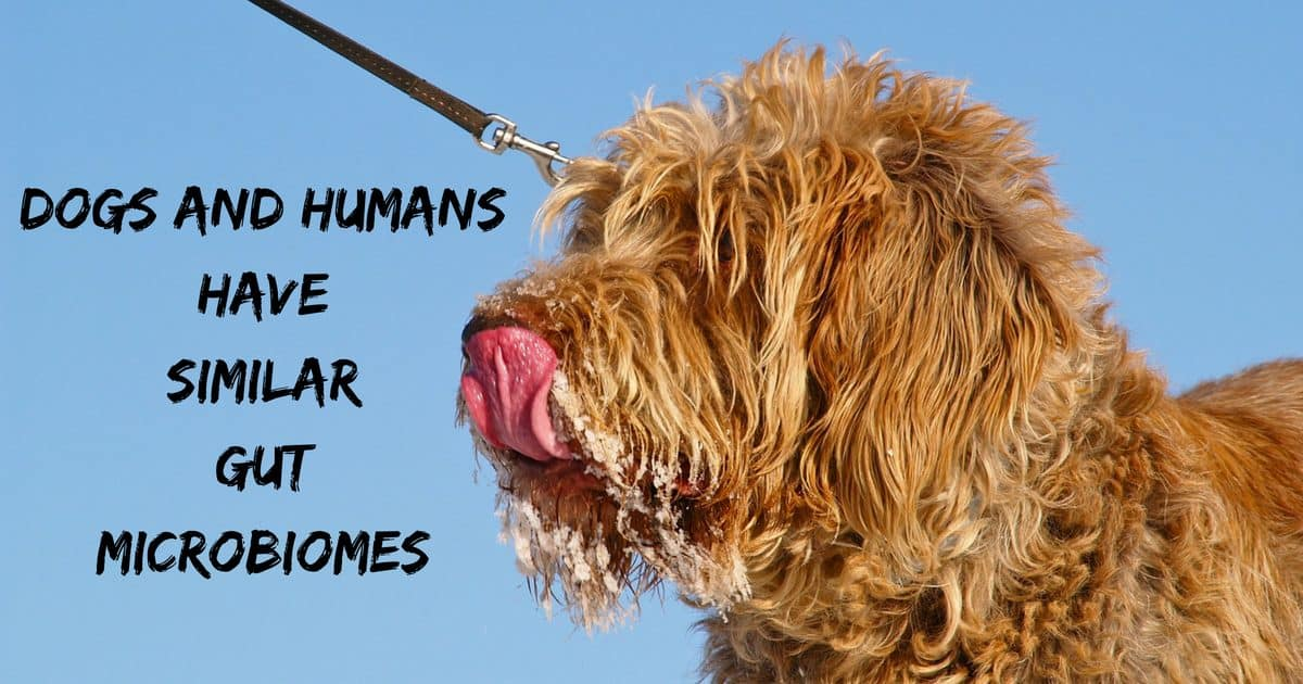 Dogs and humans have similar gut microbiomes