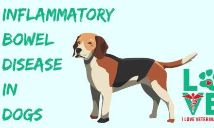 Inflammatory Bowel Disease in Dogs