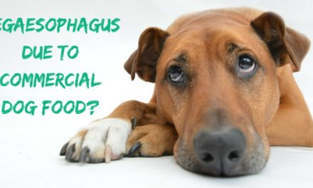 Megaesophagus due to commercial dog food?