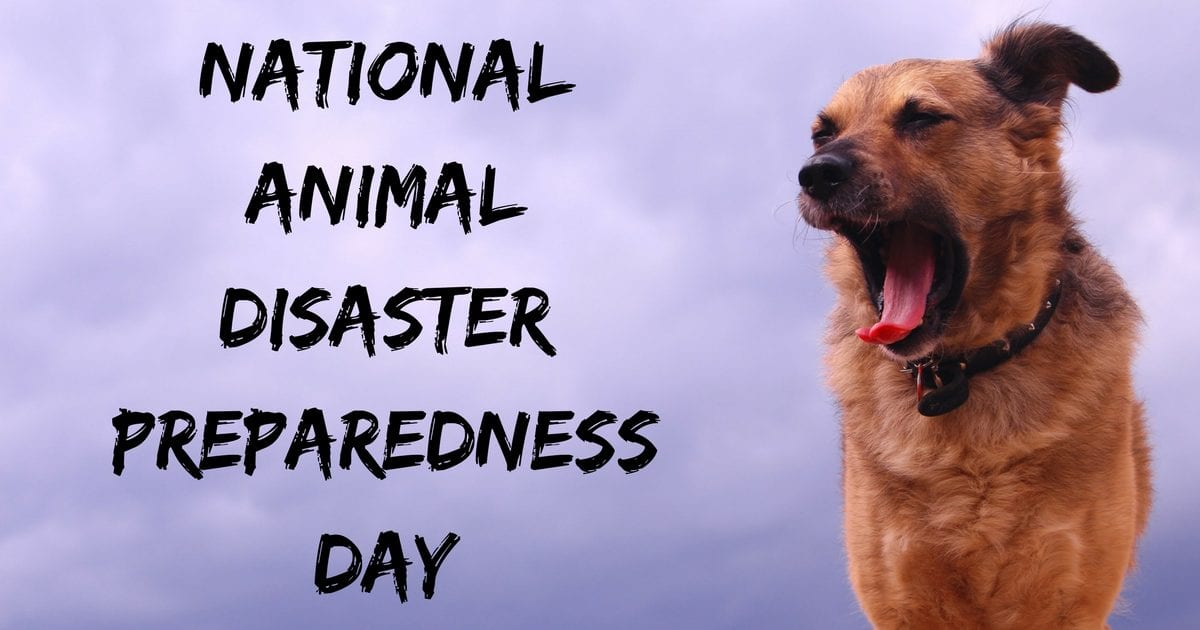 National Animal Disaster Preparedness Day – May 12