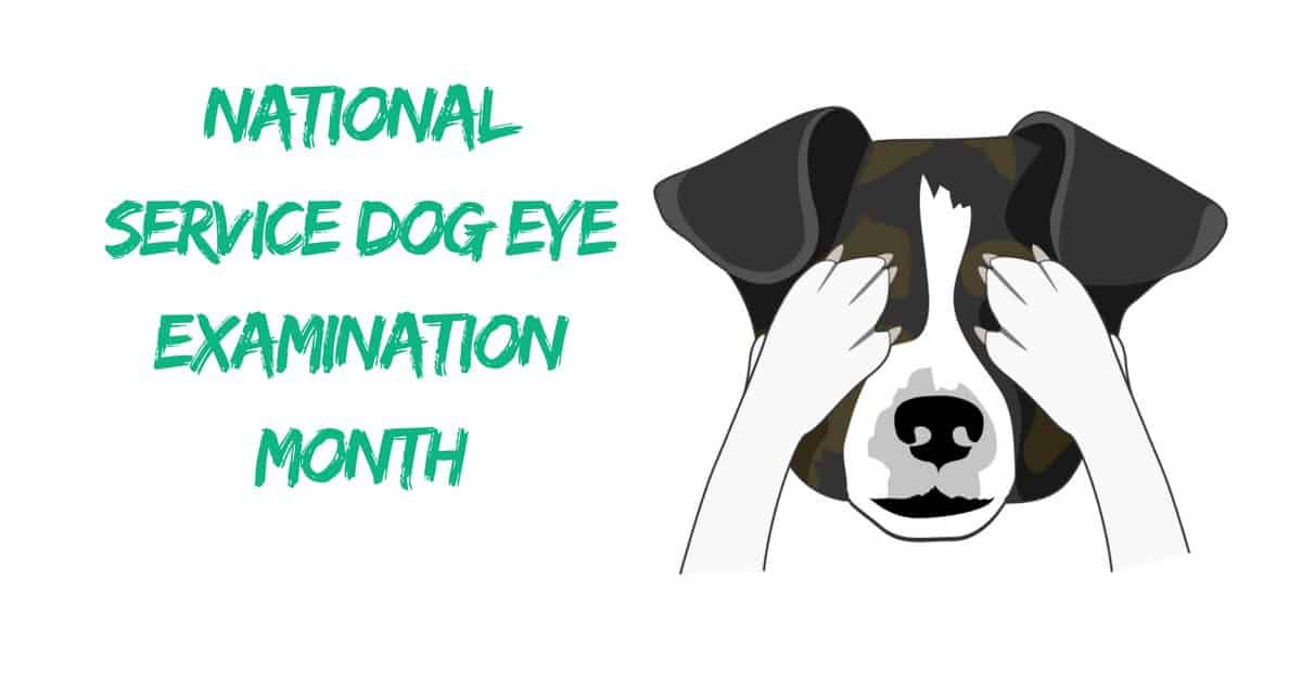 National Service Dog Eye Examination Month – May 2018