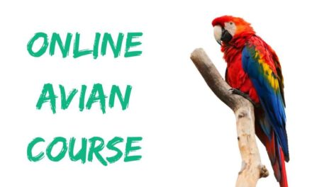 Online avian course