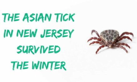 The Asian tick in New Jersey survived the winter