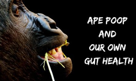 Ape poop and our own gut health