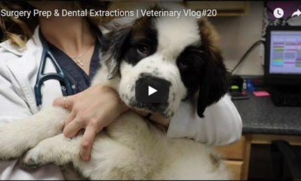 Surgery Prep & Dental Extractions – Video By Victoria Birch