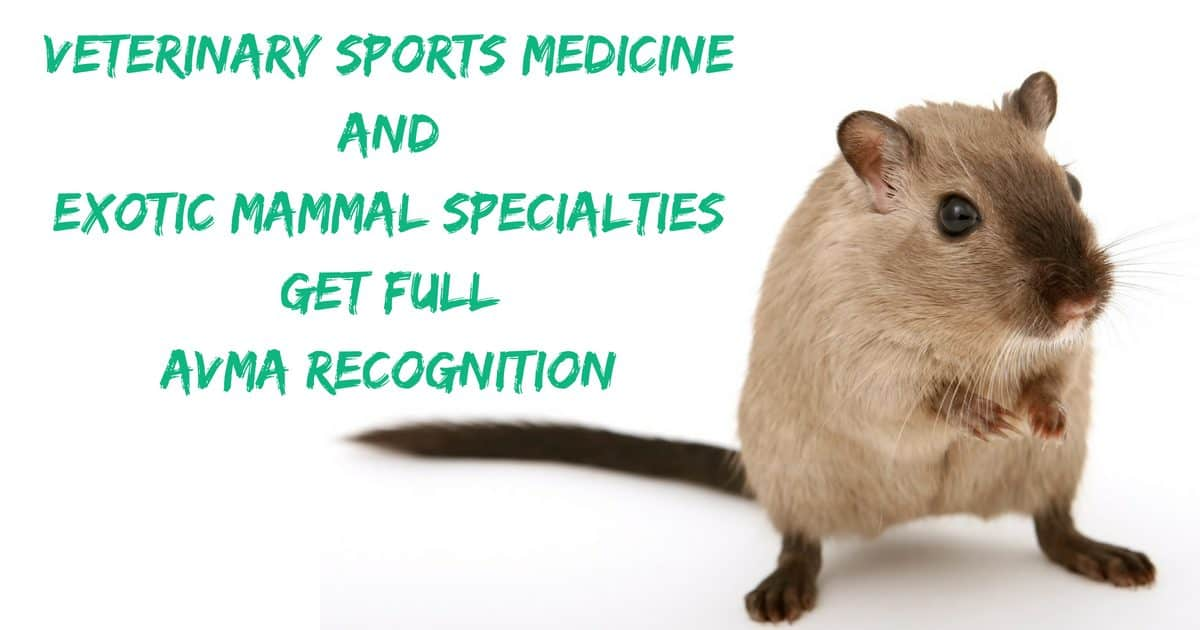Veterinary Sports Medicine and Exotic Mammal Specialties get full AVMA recognition