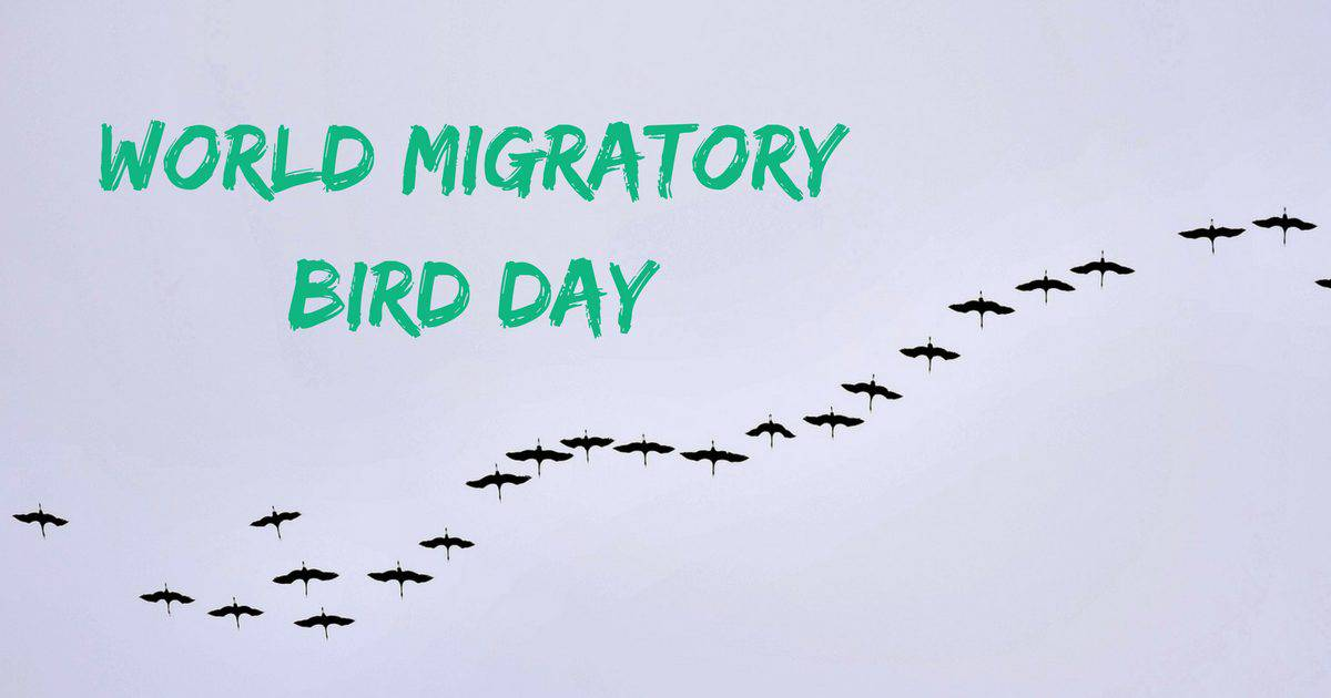 World Migratory Bird Day – May 12