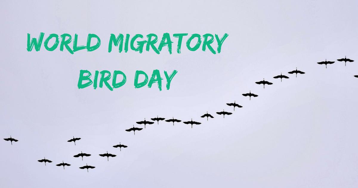 World Migratory Bird Day – May 12
