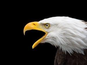 bald eagle 2715461 1920 I Love Veterinary - Blog for Veterinarians, Vet Techs, Students