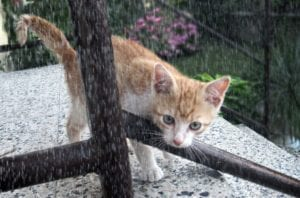 cat 2414762 I Love Veterinary - Blog for Veterinarians, Vet Techs, Students