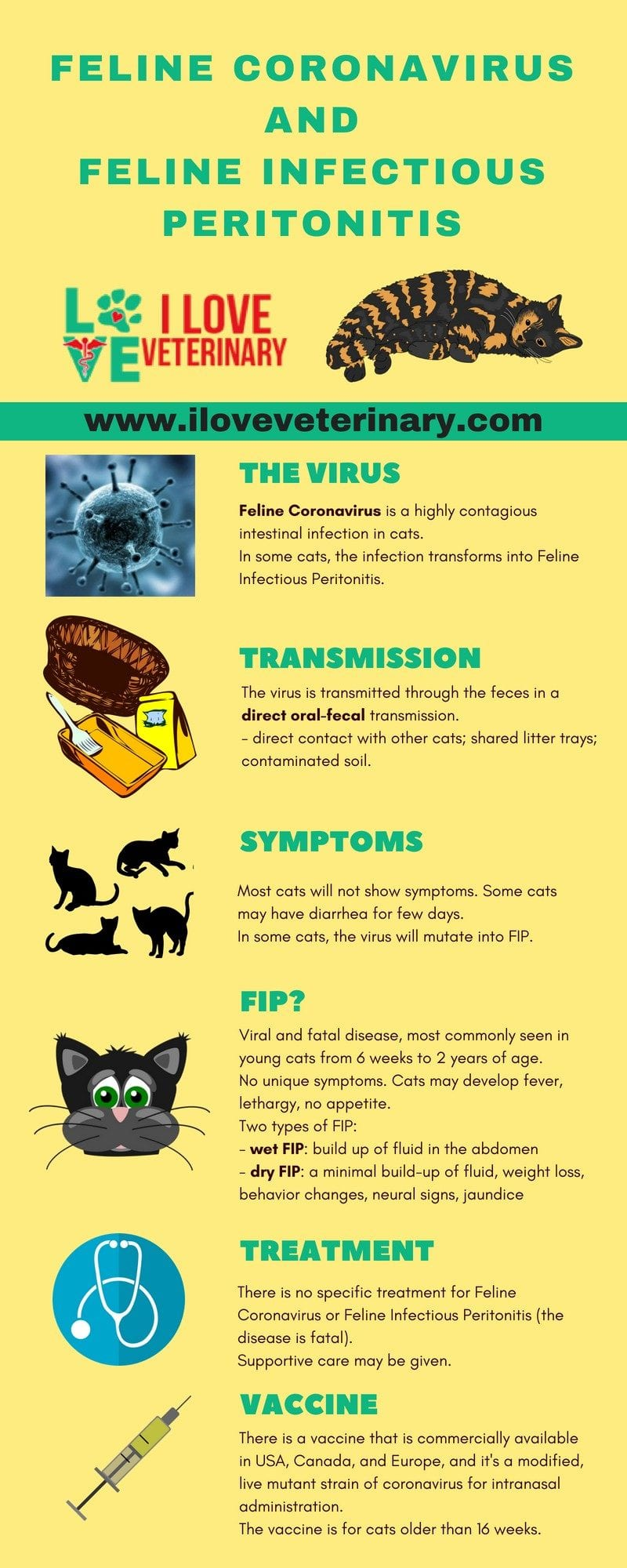 feline coronavirus 1 I Love Veterinary - Blog for Veterinarians, Vet Techs, Students