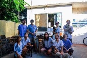 fg I Love Veterinary - Blog for Veterinarians, Vet Techs, Students