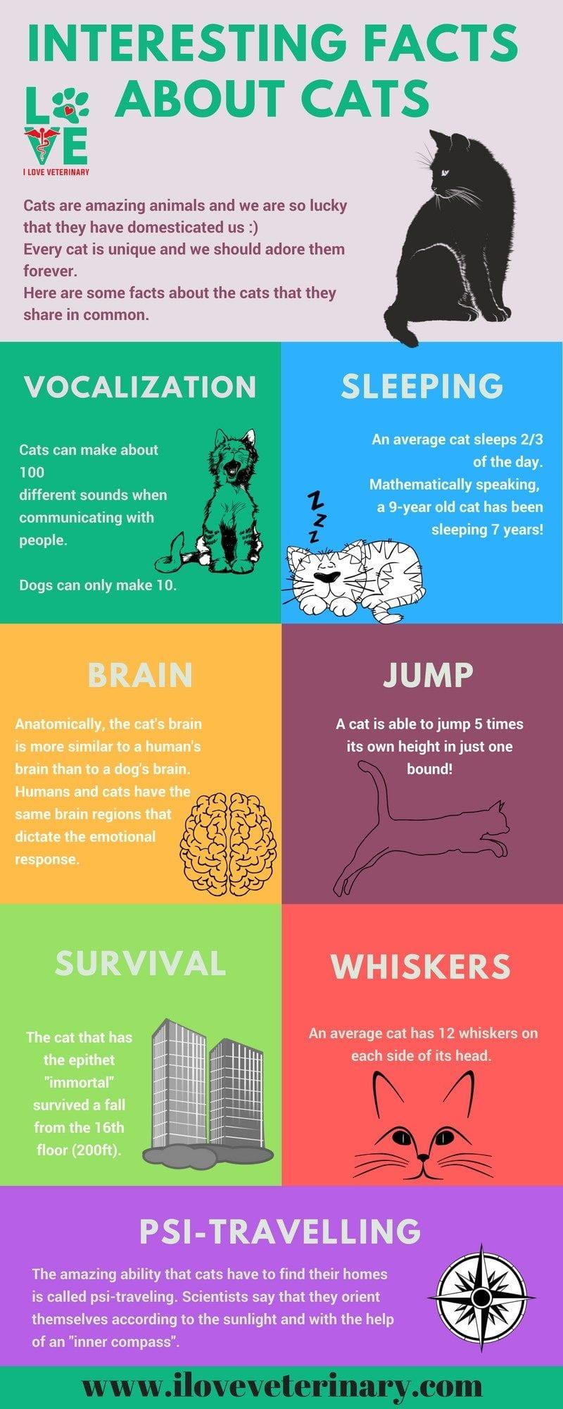 interesting factsabout cats1 1 I Love Veterinary - Blog for Veterinarians, Vet Techs, Students