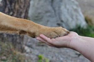paw 548634 1920 I Love Veterinary - Blog for Veterinarians, Vet Techs, Students