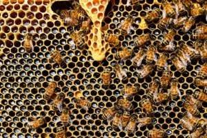 queen cup 337695 1920 I Love Veterinary - Blog for Veterinarians, Vet Techs, Students