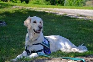 service dog 2098366 1920 I Love Veterinary - Blog for Veterinarians, Vet Techs, Students