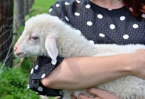 sheep 3348950 1920 I Love Veterinary - Blog for Veterinarians, Vet Techs, Students