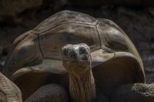 turtle 3035416 1920 I Love Veterinary - Blog for Veterinarians, Vet Techs, Students