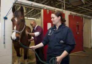 veterinarians 739365 I Love Veterinary - Blog for Veterinarians, Vet Techs, Students