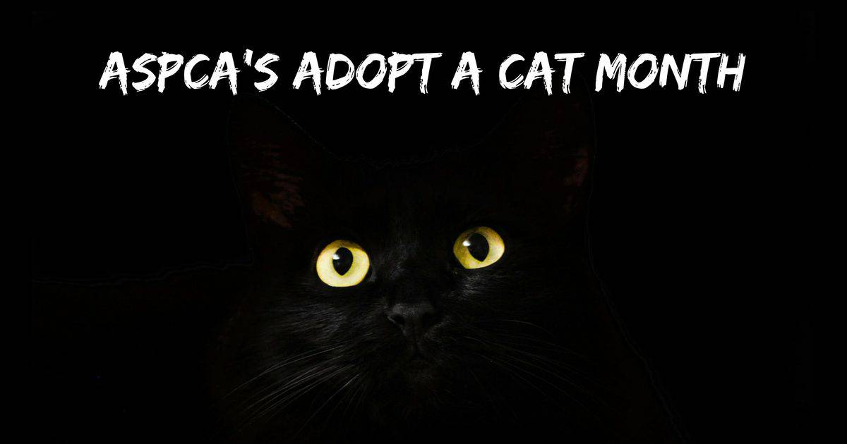 ASPCA's Adopt a Cat Month