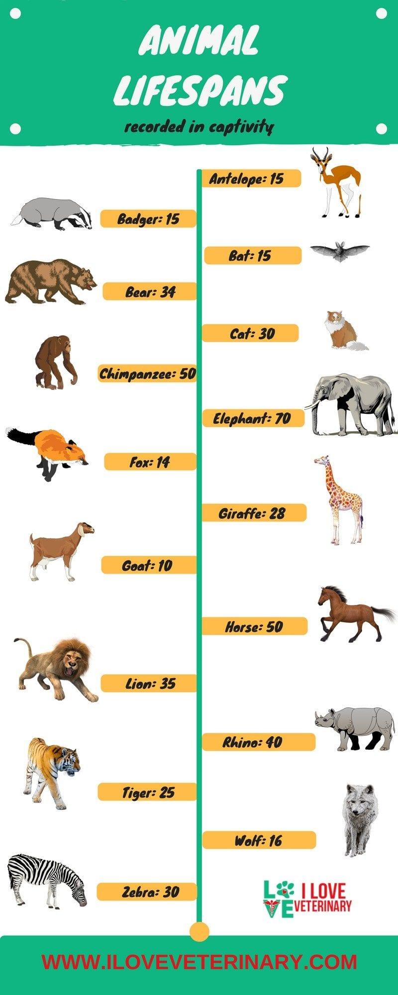 Animal lifespan infographic