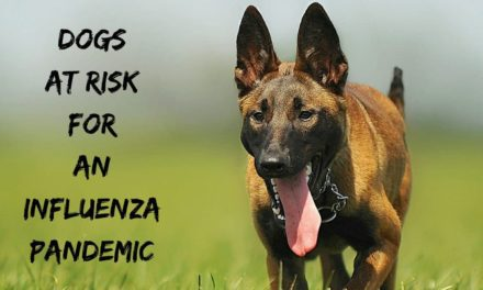 Dogs at risk for an influenza pandemic