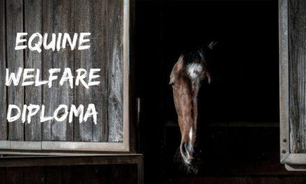 Equine Welfare Diploma