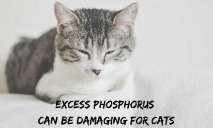 Excess phosphorus can be damaging for cats