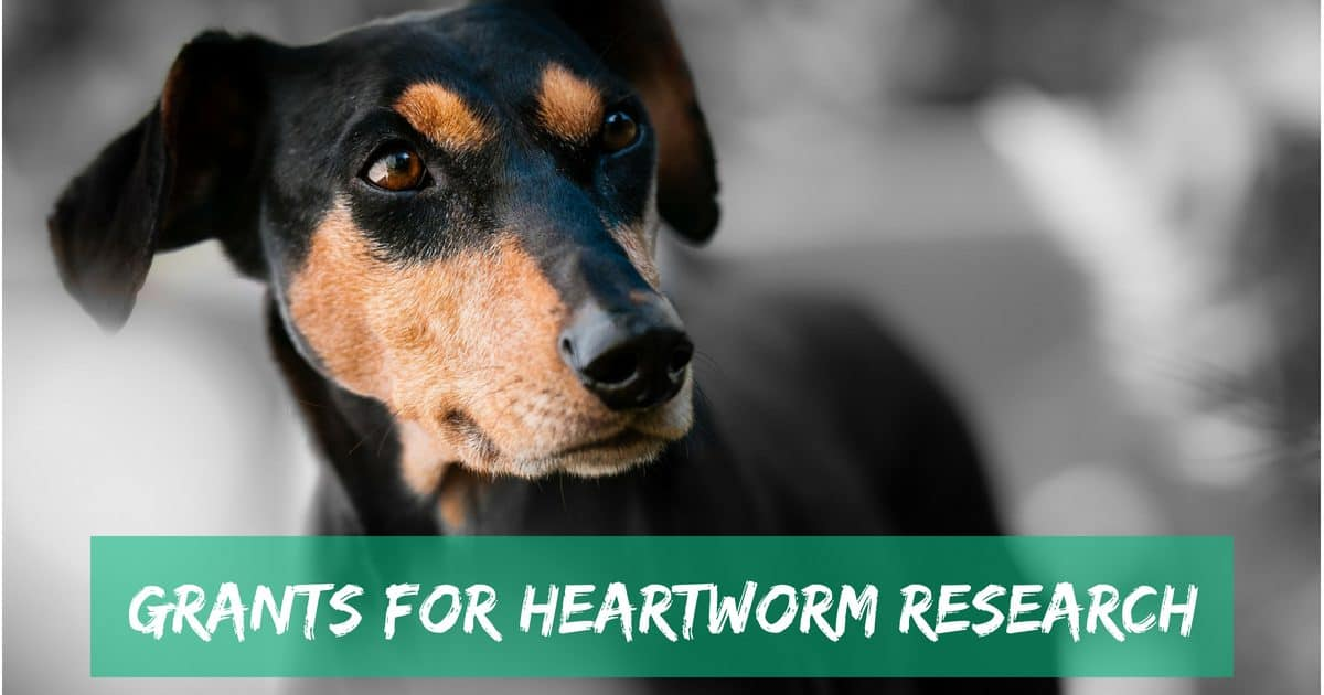 Grants for Heartworm Research