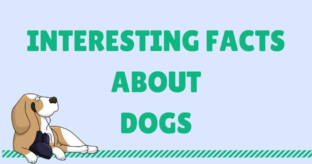 INTERESTING FACTS ABOUT DOGS1 I Love Veterinary - Blog for Veterinarians, Vet Techs, Students