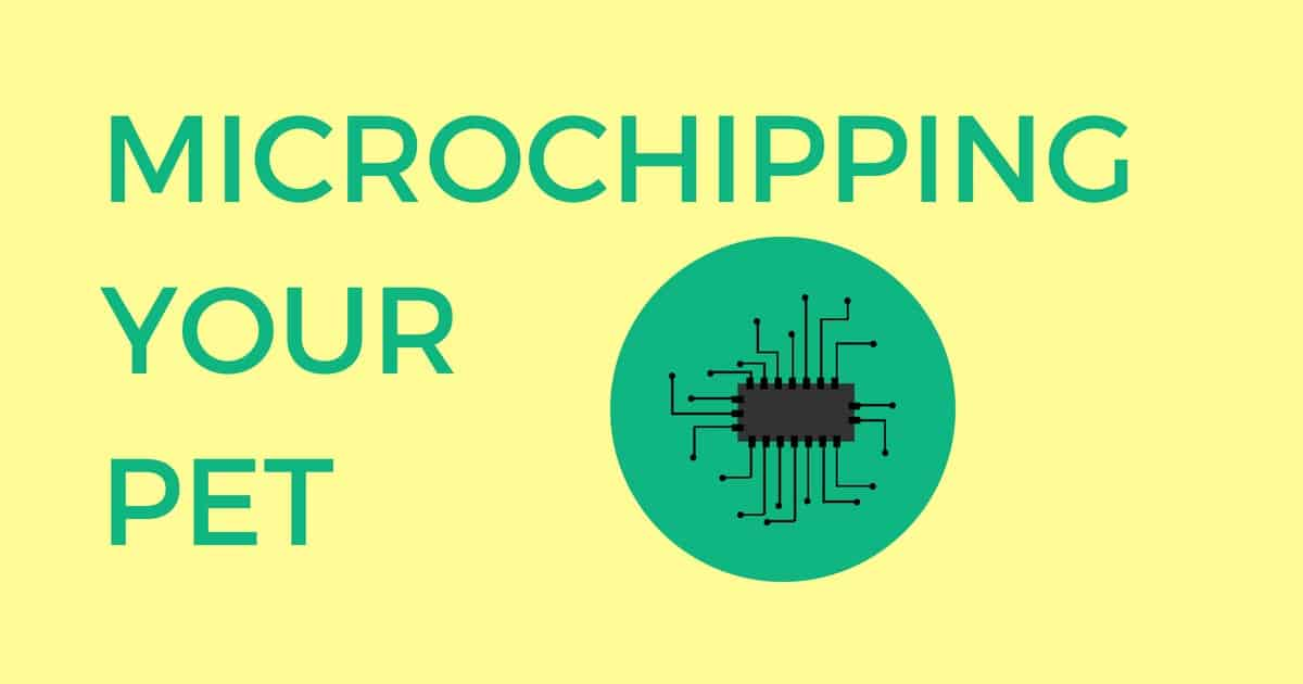 Microchipping Your Pet