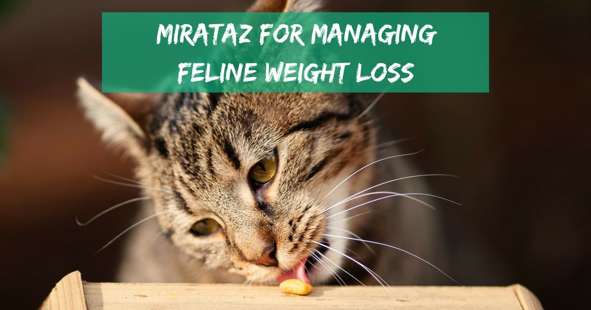 Mirataz for managing feline weight loss