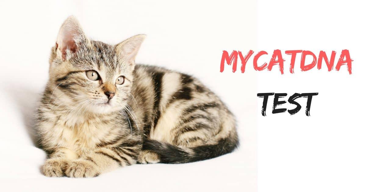 MyCatDNA Test